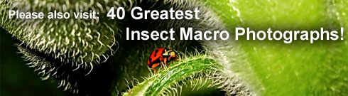 40 Greatest Insect Macro Photographs