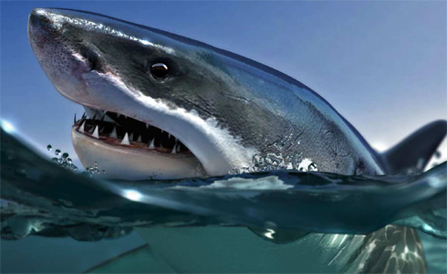 Shark, by Bertaccini