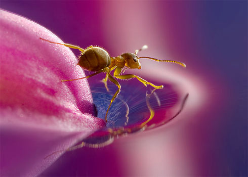 Ant on Water, by Leon Baas
