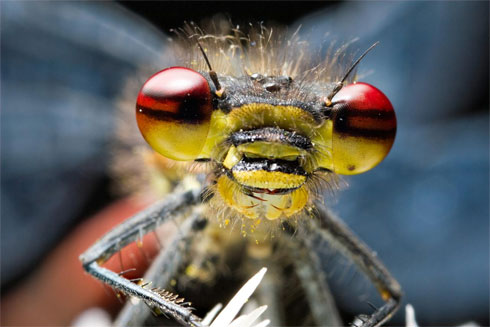Dragon Fly, by Robert Seber