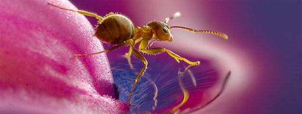 40 Greatest Insect Macro Photographs!