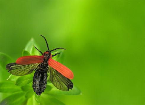 Little Bug, by Pawel Bieniewski