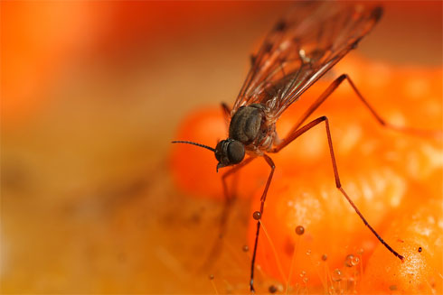 Mosquito, by Brian Valentine