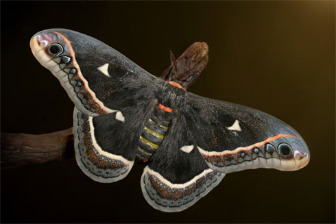 Moth, by Igor Siwanowicz